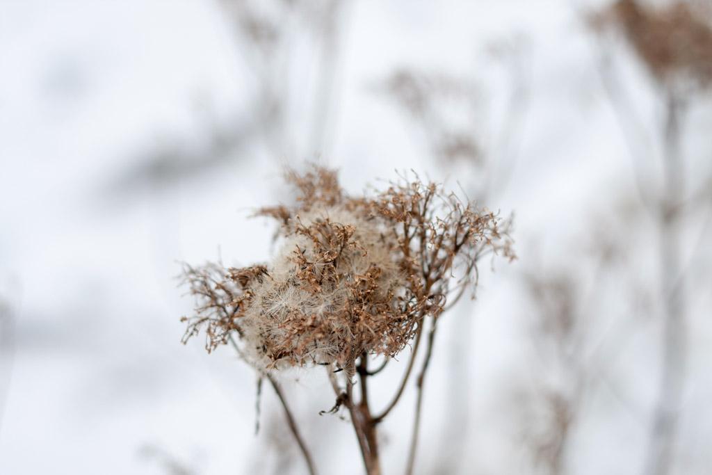 Winterblicke_6277