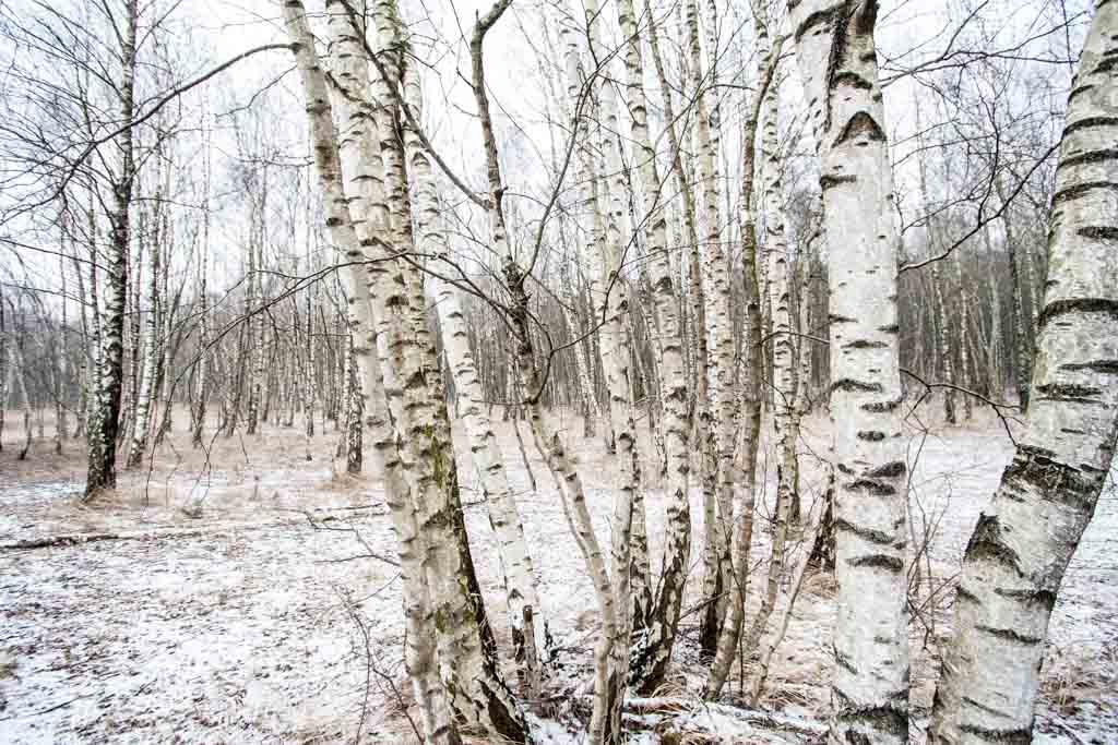 Winterblicke_6352