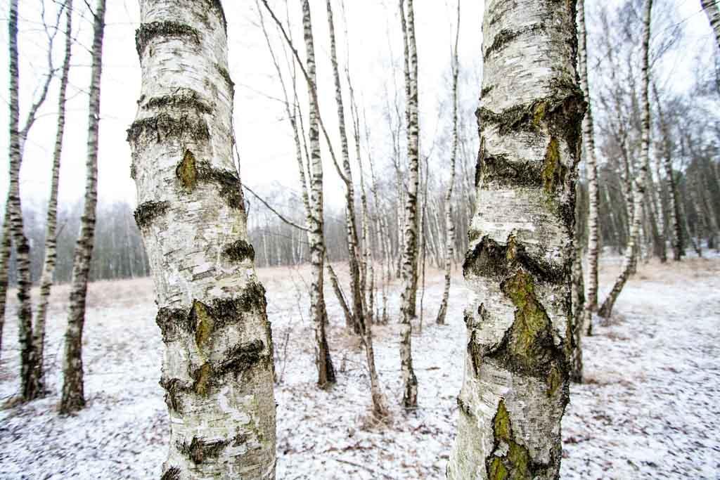Winterblicke_6359