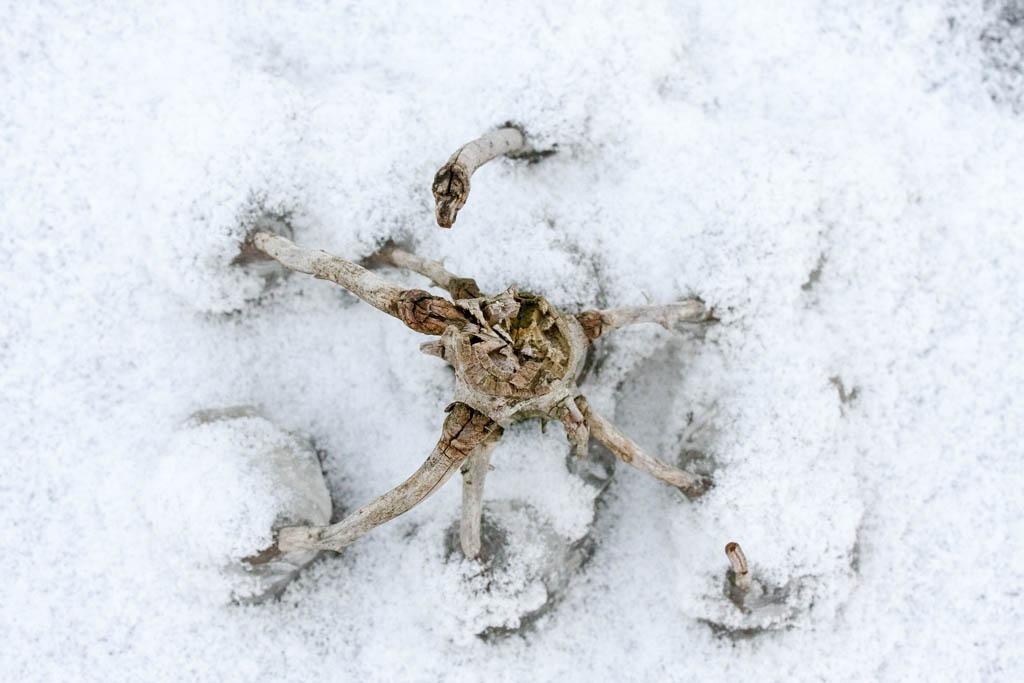 Winterblicke_6375