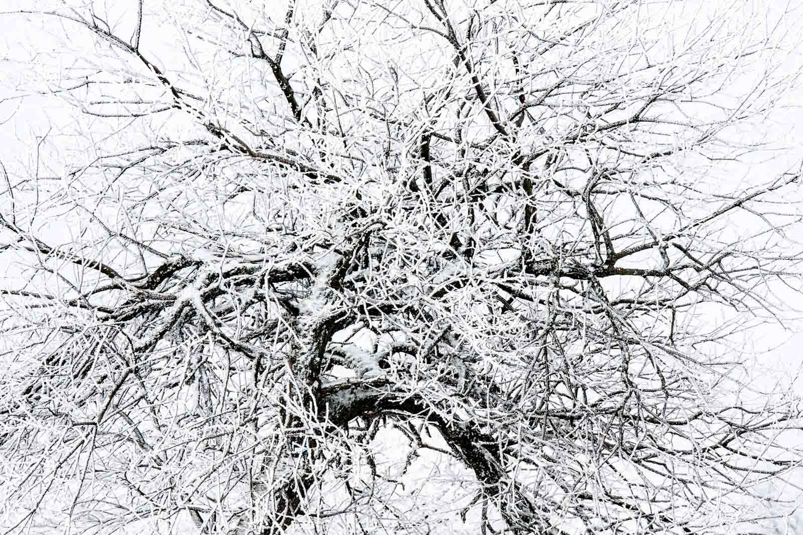 Winter - kontemplative Fotografie