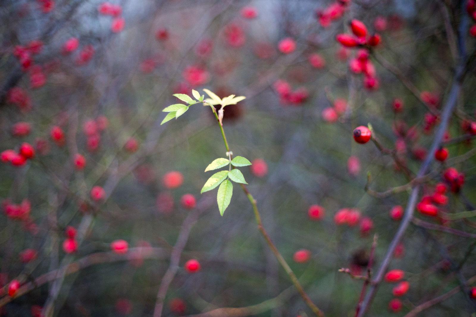 winterbunt 2 | kontemplative Fotografie